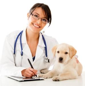 задать вопрос ветеринару