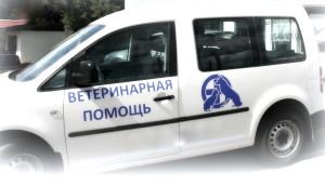 вызов ветеринара на дом видное, московский, троицк, домодедово