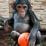 болезни обезьян
