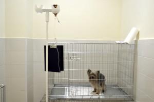 Стационар для собак
