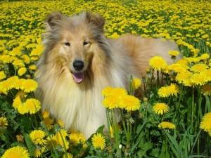 тепловой удар у собак