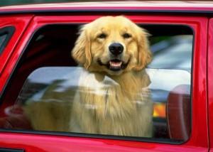 поездки с собакой