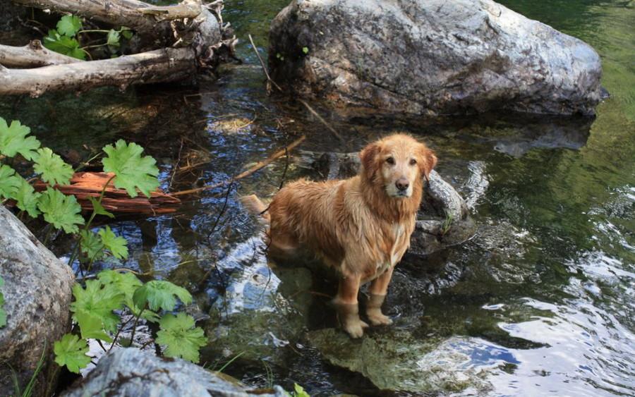 Купание собак в открытых водоемах